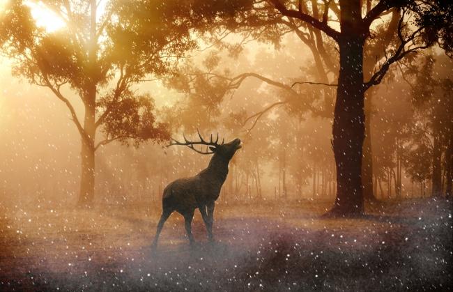 un-cerf-dans-la-forêt-images-photos-gratuites.jpg