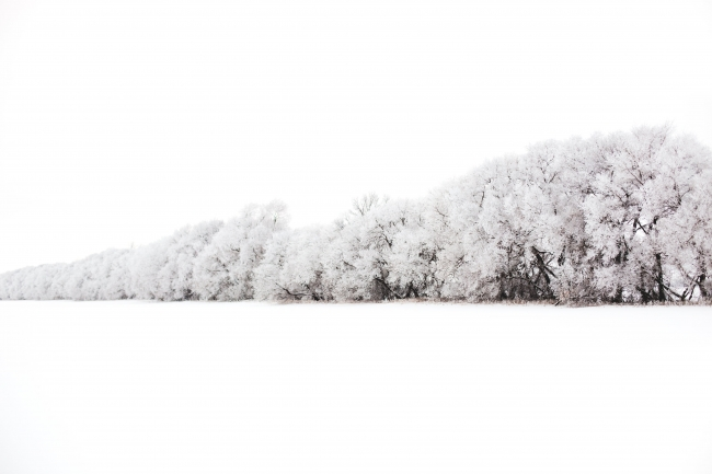 wall-of-trees-burdened-with-snow.jpg