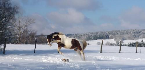 cheval et chien.jpg