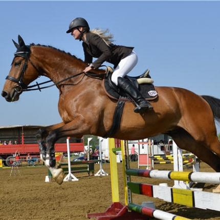 1751670-equitation-36-euros-pour-une-licence-adulte.jpg